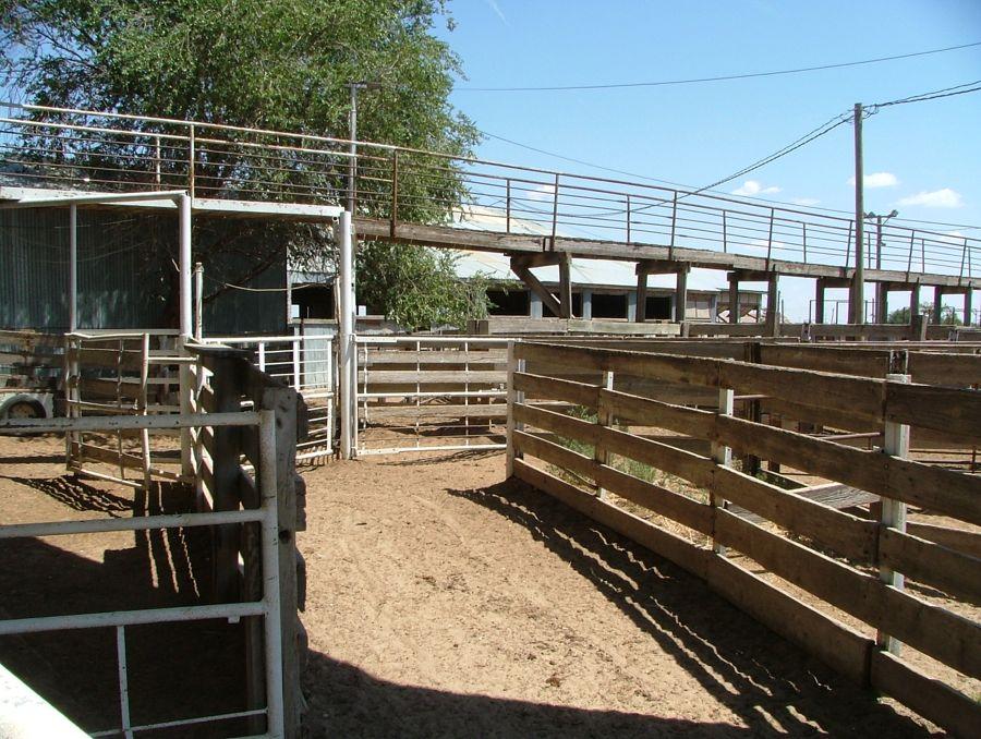 Livestock 31