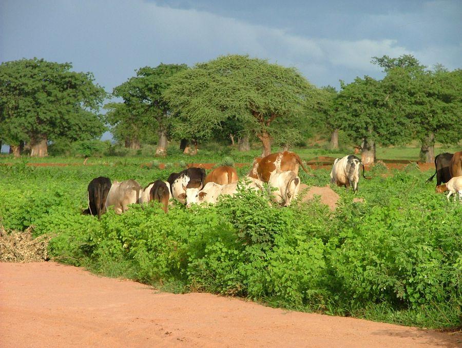 Tanzania Feb 2009 gr3 050
