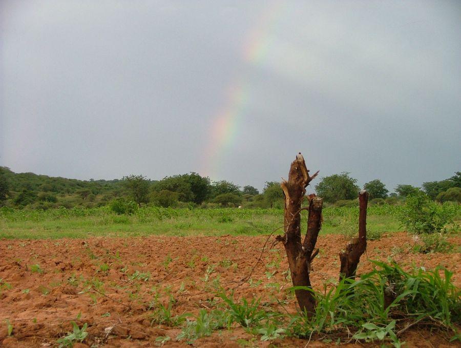 Tanzania Feb 2009 gr3 066