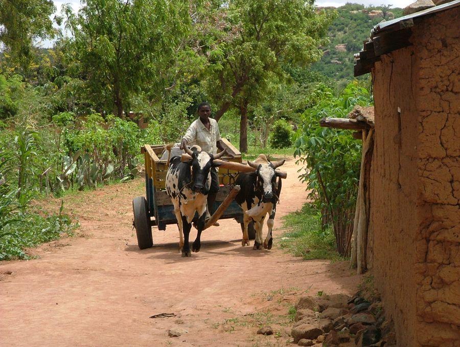 Tanzania Feb 2009 gr3 200