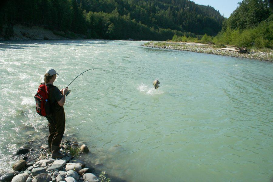 Martin fishing
