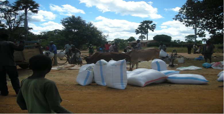 A Purchasing maize from local farmers in Tabora43