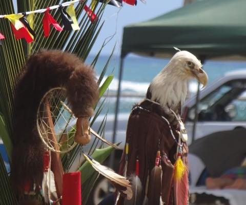 Powwow in Paradise